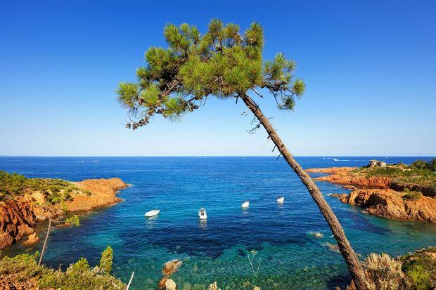 Champ d'olivier Côte d'Azur