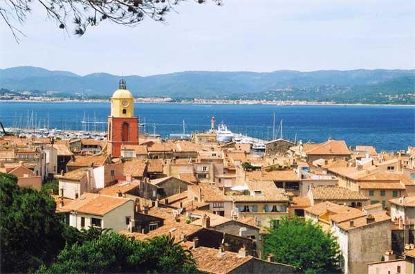 Champ d'olivier Saint Tropez